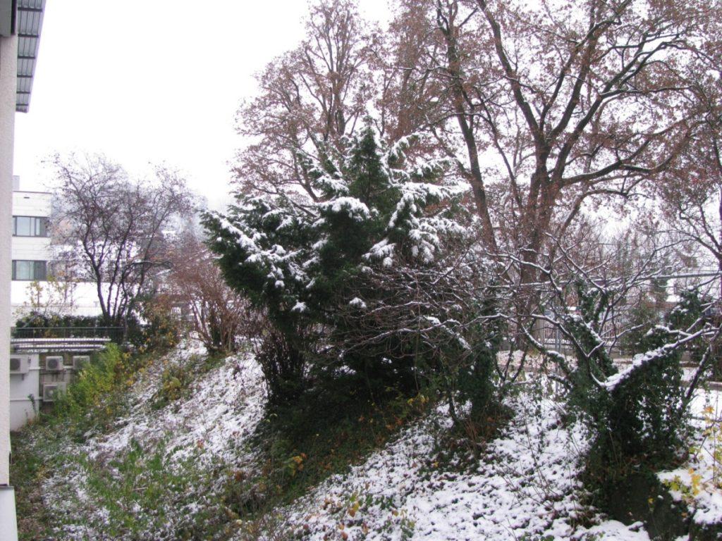 Śnieżny poranek przed kliniką, 1.12.2020 r.